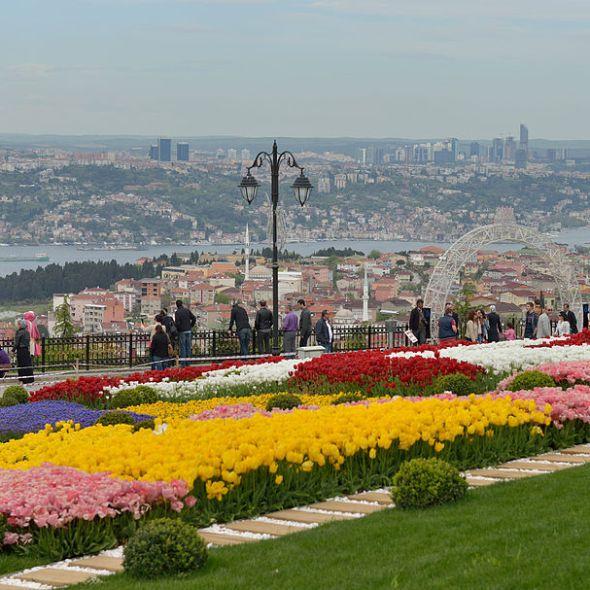 turkey and tulips – Fez Travel